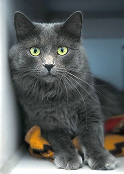 Black-Cat-with-Green-Eyes-in-Cat-Condo