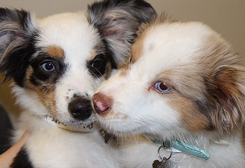 Two Puppies Together